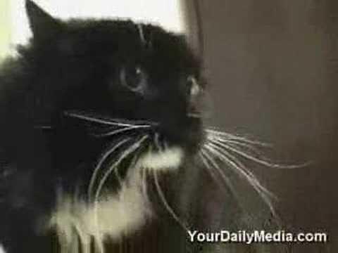 pratende katten,erg grappig