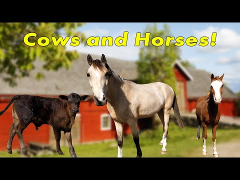 , title : 'Kids! Cows and Horses on the farm! Feed the Cows and watch Horses Trot!