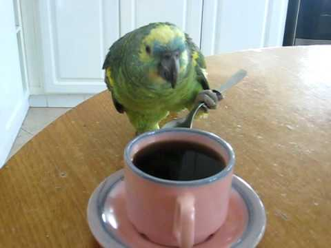 Loro tomando café con cuchara