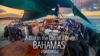 A Day in the Life of a Diver: Bahamas