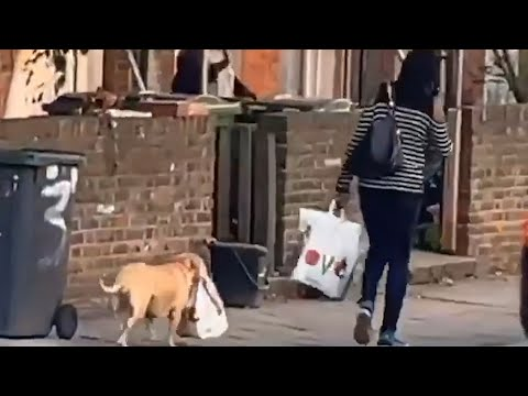 Dog Happily Carries Grocery Bag For Owner