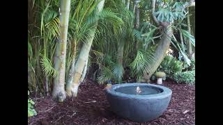 Painted bunting bird bath South Florida