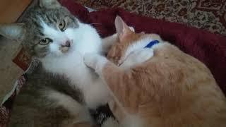 Милые котейки.