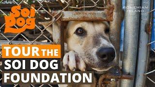 Tour The Largest Stray Dog Shelter In Thailand (Soi Dog Foundation, Phuket)