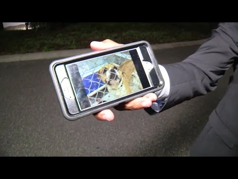 Dog deemed dangerous returns to neighborhood: Digital Short