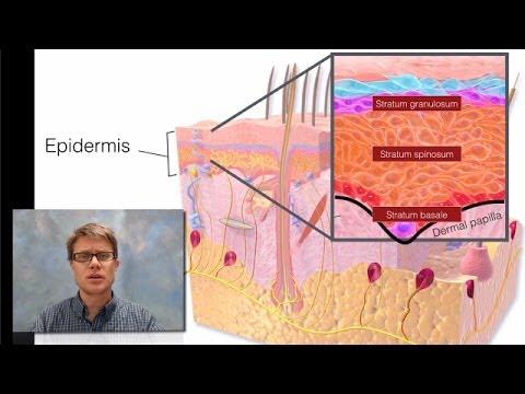 Le psoriasis dans les plis de coude