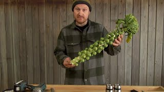 Brussels Sprout vs Liquid Nitrogen