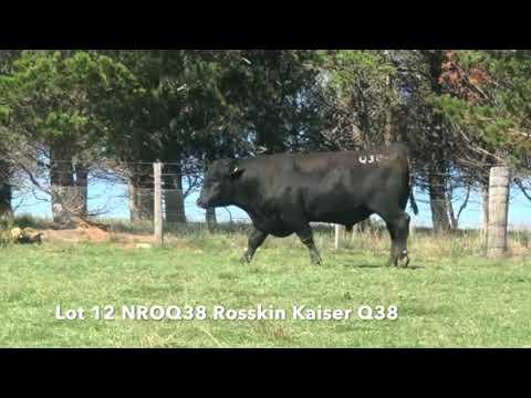 ROSSKIN KAISER Q38