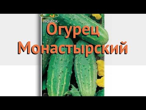 Огурец обыкновенный Монастырский (monastyrskiy) 🌿 обзор: как сажать, семена огурца Монастырский