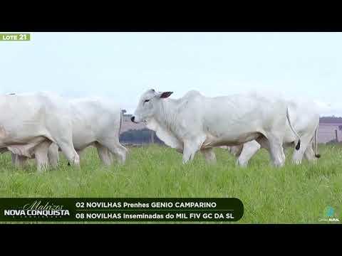 02 NOVILHAS PRENHES - 08 NOVILHAS INSEMINADAS