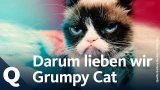 Das Phänomen Der Grumpy Cat   Quarks