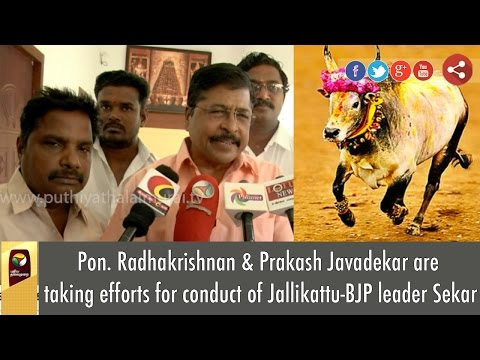 Pon-Radhakrishnan-Prakash-Javadekar-are-taking-efforts-for-conduct-of-Jallikattu-BJP-leader-Sekar