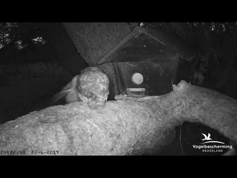 23.06.2019 (De drie muizen)