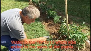 Planting Tomatoes in New Jersey by Farmer John