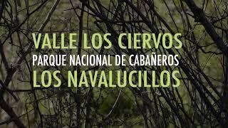 Video del alojamiento Valle Los Ciervos