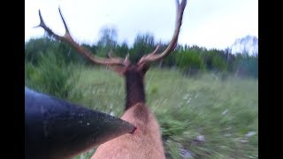I've Speared A Bull Elk!  Holy Crap!