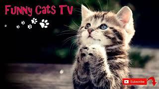 Приколы с кошками! ! ! !