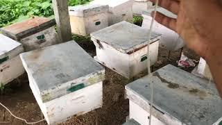Beekeeping In Rainy Season