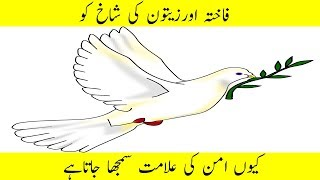 Why is the dove and olive branch a symbol of peace|fakhta aman ki alamat |peace symbol
