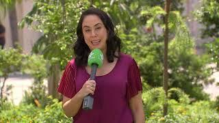 Jardins de chuva são solução para diminuir o impacto das enchentes nas cidades