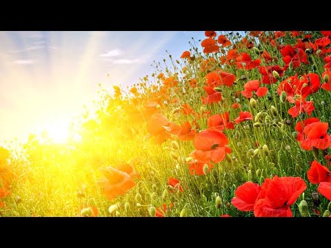 GOOD MORNING MUSIC ➤ Rise Up Positive Energy ➤ 432Hz Beautiful Meditation Music