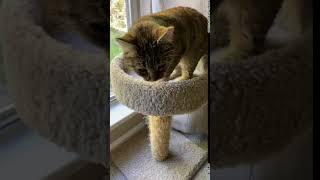 Tabby Cats Videos