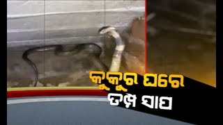 Damdar Khabar: Dog fights snake to save puppies
