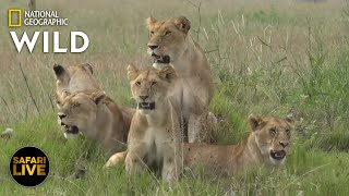 Safari Live - Day 285 | Nat Geo Wild