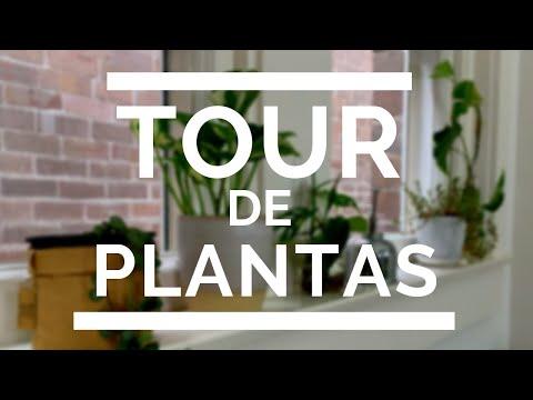 Tour De Plantas De INTERIOR