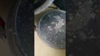 Mite-Free Grindal Worm Cultures