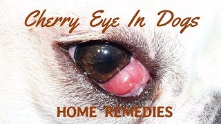 What Causes Cherry Eye and Can It Be Corrected?