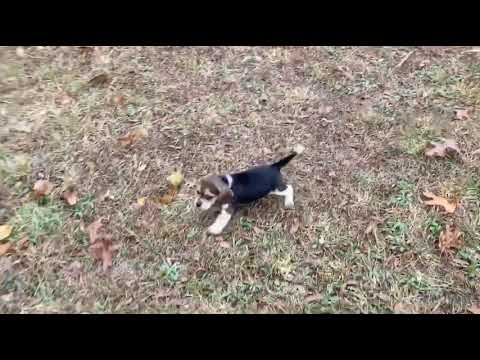Lucky running around in our yard!
