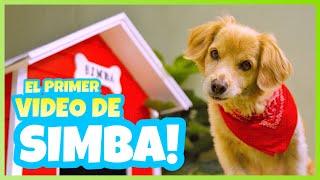 Daniel El Travieso - El Primer Video De Simba. (TEMPORADA 2 - EPISODIO 9)