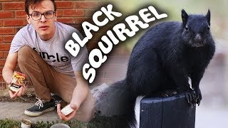 CATCHING A BLACK SQUIRREL!!! - Save the Squirrels Initiative