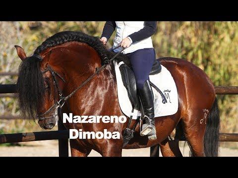 Nazareno Dimoba montado - 8-1-2019