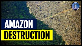 The Destruction of the Amazon