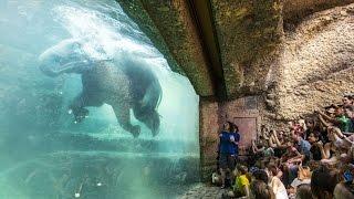 Los 5 mejores zoológicos del mundo