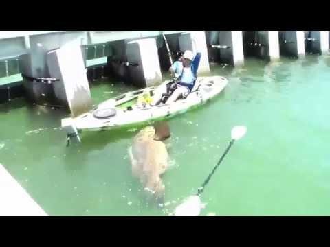 Corso superiore di pesca di Yenisei di video