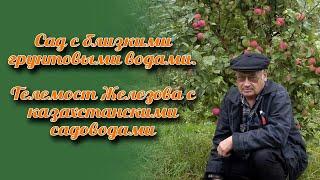 Сад с близкими грунтовыми водами - телемост Железова с казахстанскими садоводами