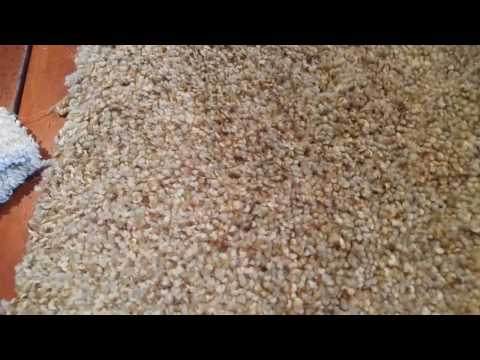 Why you should never rub or scrub your carpet - Rendall's Cleaning