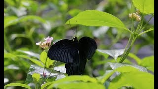 Butterfly Journey: From Costa Rica to the Academy | California Academy of Sciences