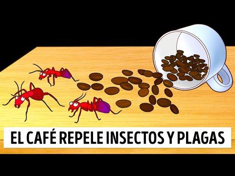 Aprende a Repelar Las Hormigas En Casa Sin Insecticidas
