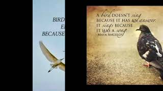 Birds and motivational quotes