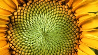 The Mind-Blowing Mathematics of Sunflowers - Instant Egghead #59