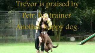 preview picture of video 'www.K9-unit.com Dog Training promo 17th August 2009'