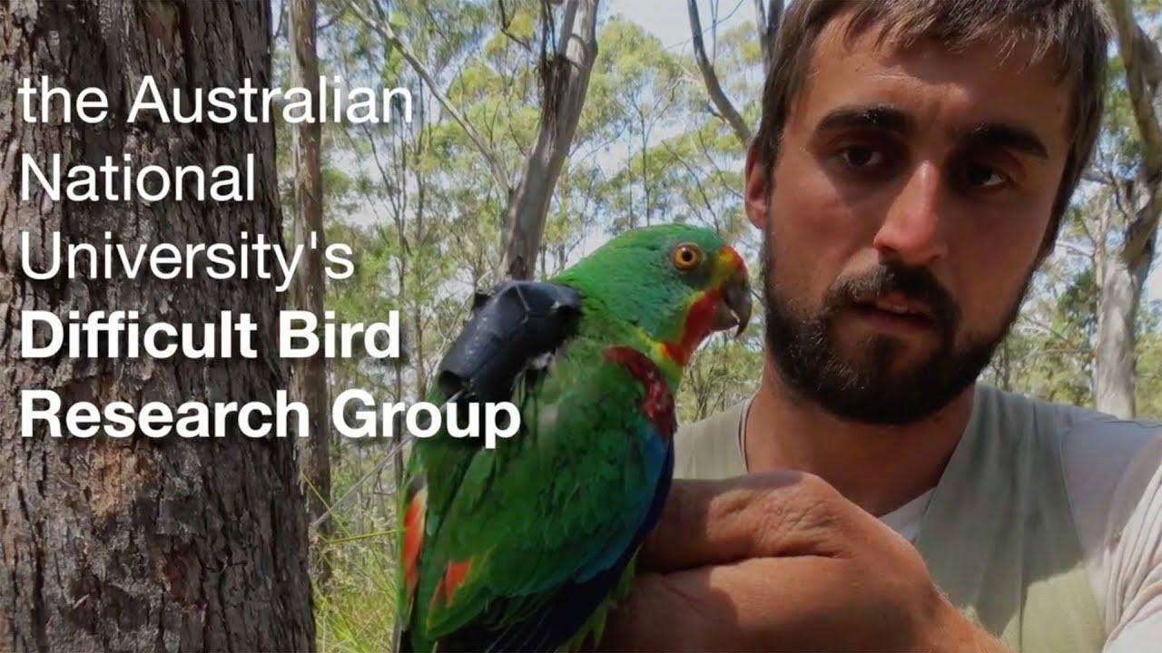 Saving Tasmania's difficult birds