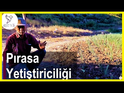 , title : 'Pırasa Yetiştiriciliği | Pırasa Nasıl Ekilir? | Pırasa Tohumu Nasıl Ekilir? | Gördes-Manisa'