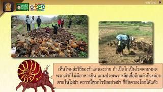 สื่อการเรียนการสอน นิทาน เรื่อง ไวรัส วายร้าย  ป.4 ภาษาไทย
