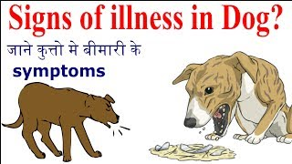 Signs Of Illness In Dog