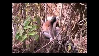 preview picture of video 'Isalo, Rando dans le Parc National (Madagascar)'